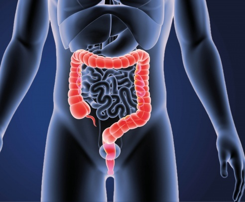 An image of the human body, with the bowel highlighted
